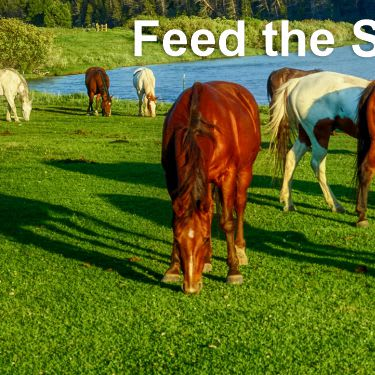 healthy horses grazing