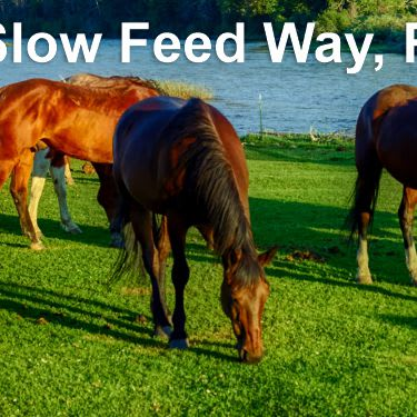 slow feeding does not promote wait gain